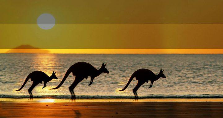 Aussie Adventures 2007-2008
